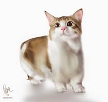 ORI: Kitty by ephemeralvision