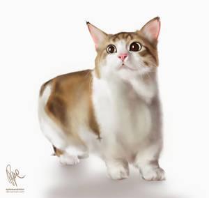 ORI: Kitty