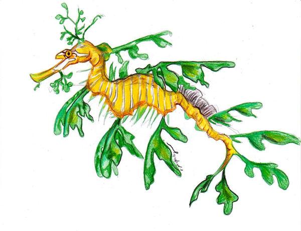 Leafy Sea Dragon by RuneWolfe on deviantART