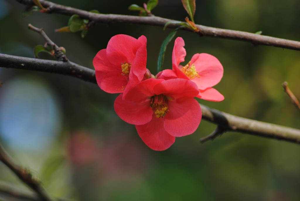 Red flowers by Elmininostock