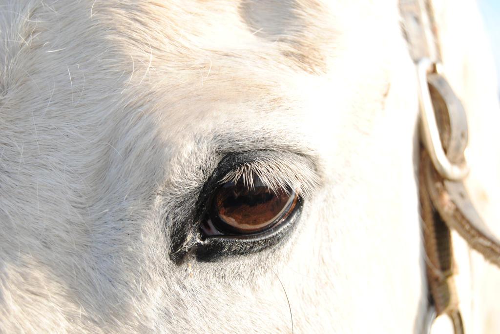 Horse's eye by Elmininostock