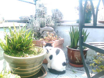 Kitty On Balcony by Ruby-Moon507