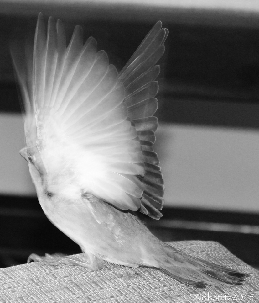 An Angel by dbstrtz
