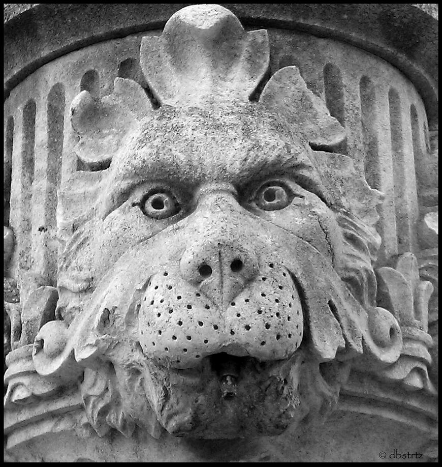 Lion by dbstrtz