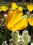 Happy Greetings by Lotus105