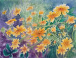 The Delight of Daisies