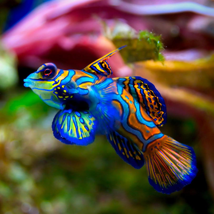 Freshwater aquarium fish photos - 19 Best Images About Aquarium On Pinterest Blue And Tropical Fish And Colorful Fish