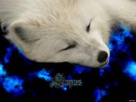Wolf Wallpaper by felven
