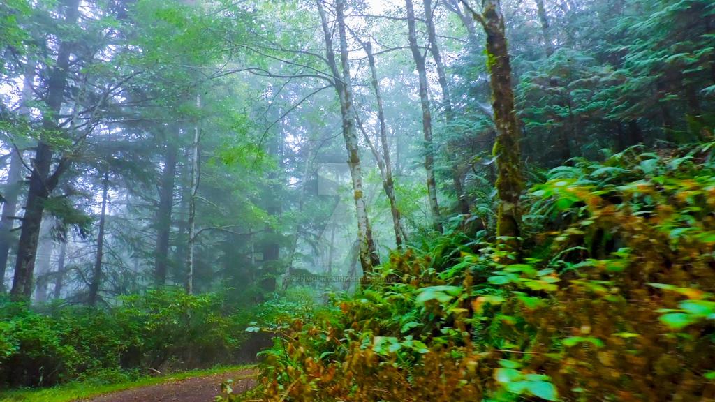 Foggy Forest Road by zenmountainmedia