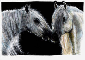 Two lusitano stallions by TheSilverLightning