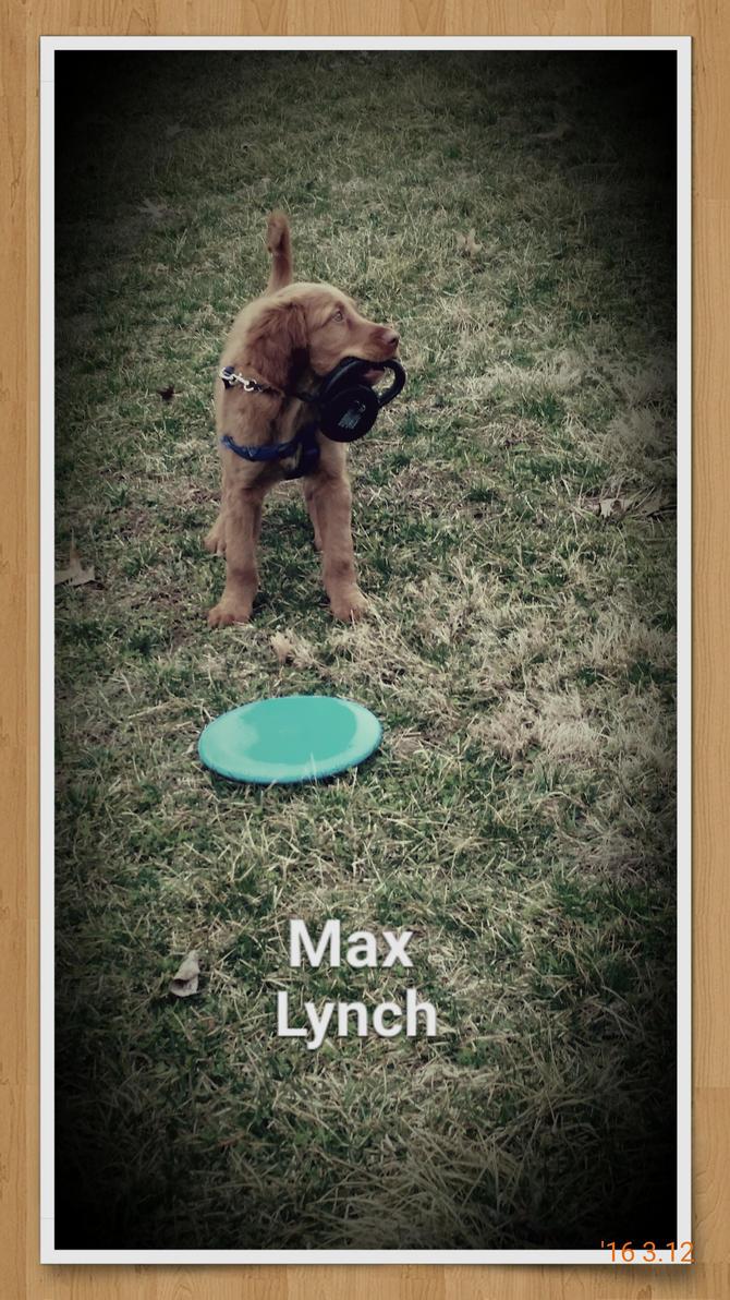 Max by BugsterKT