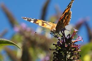 Butterfly Stock #009 by Sheriartea