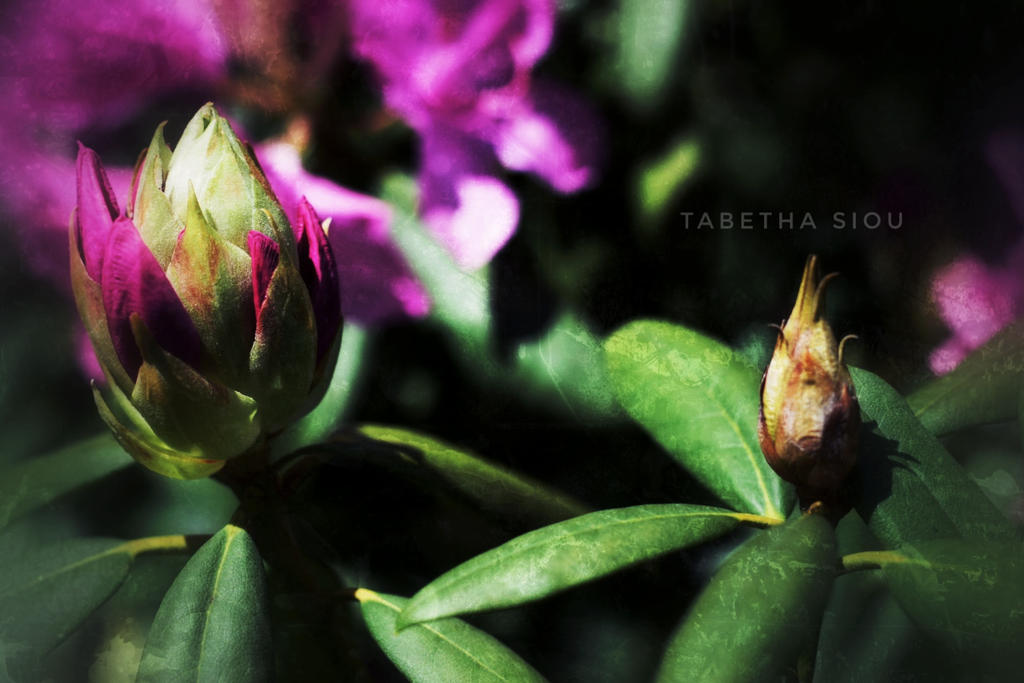 pink babies by Tabetha-Sioux
