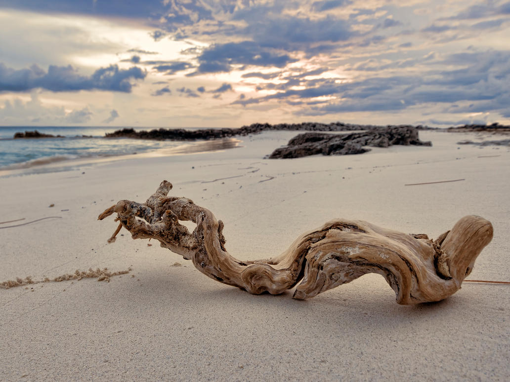 Driftwood sunset by peterpateman