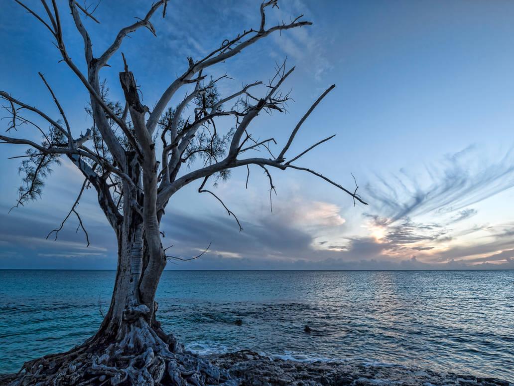 Spooky tree sunset