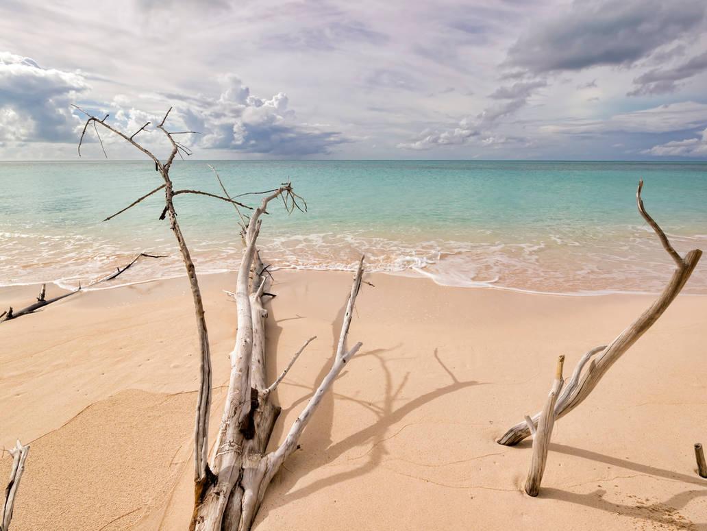 Dali's beach