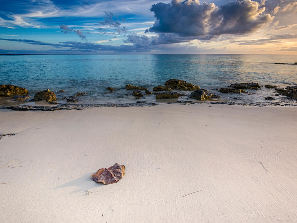 Seagrape leaf on a deserted beach by peterpateman