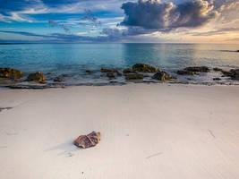 Seagrape leaf on a deserted beach by peterpateman