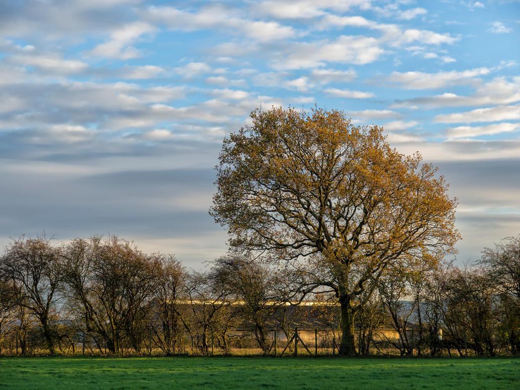 Rural Autumn by peterpateman