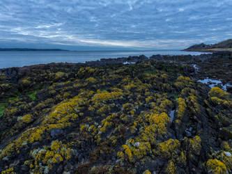 Moss in the golden hour by peterpateman