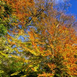 Oakfield Glen Autumn by peterpateman