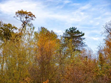 Treetop wallpaper