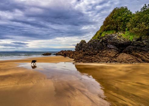 Dog on Fintra beach