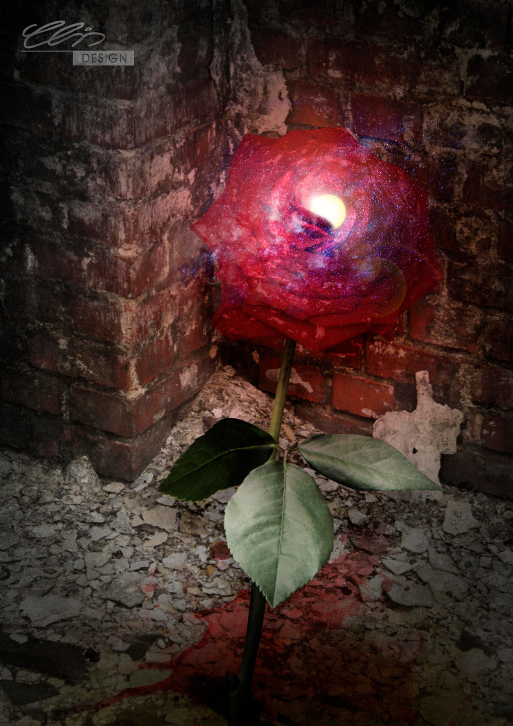 the.rose by creativeIntoxication