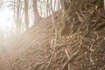 enchanting.roots