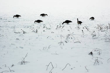 A field of snow by tyhopho