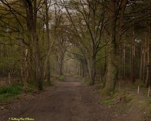 Lane through to woods