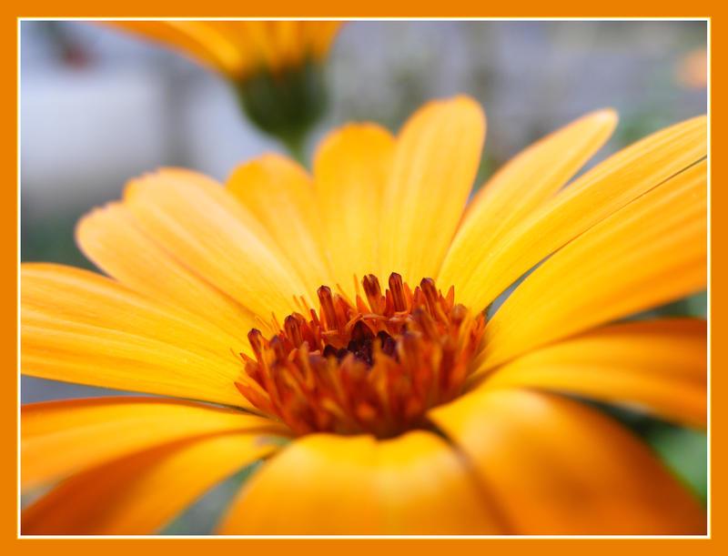 Yellow by alb-albastru
