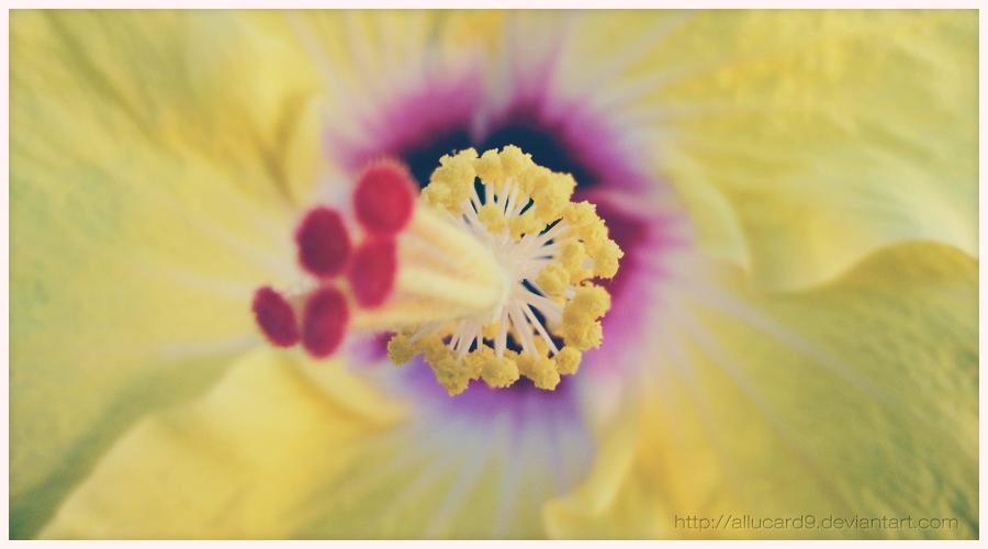 .El Tulipan by Allucard9
