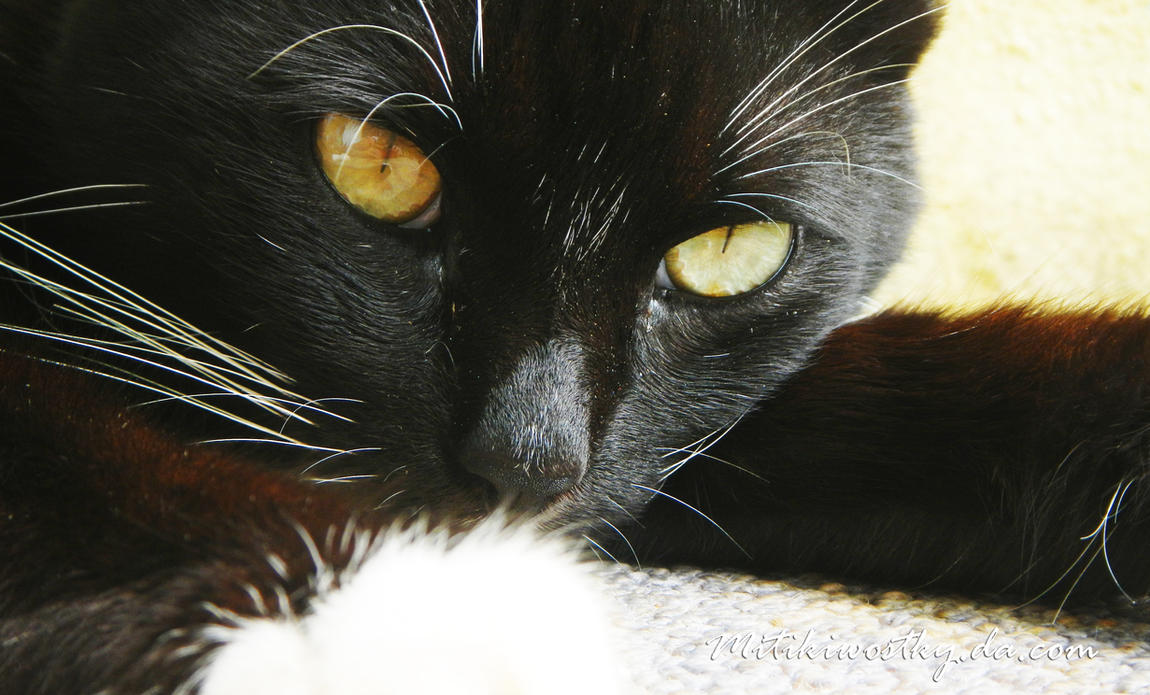 Felix, the Cat by mitikiwostky