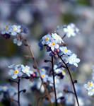 Forgotten Garden by FreyaPhotos