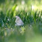 Amongst the Grass... by FreyaPhotos