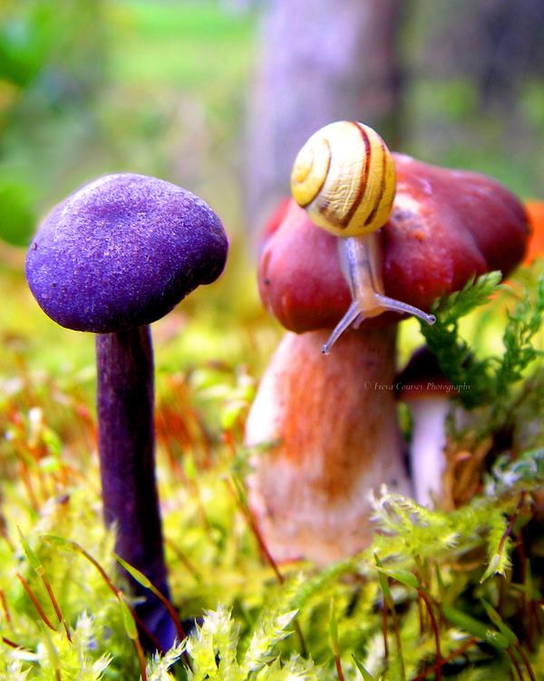 Alice's Snail by FreyaPhotos