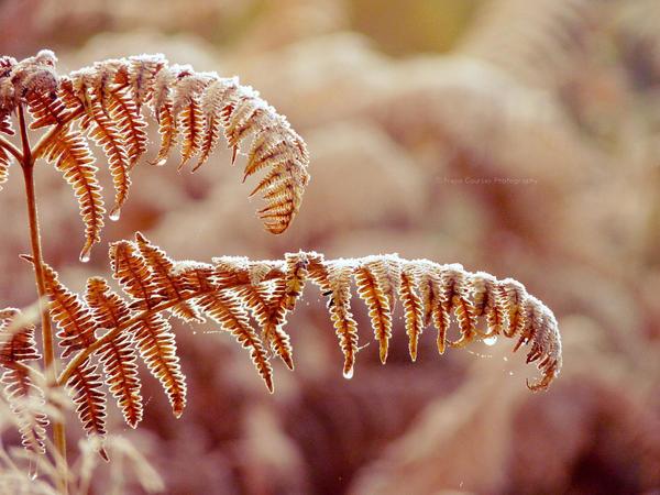 Frosty Morning V by FreyaPhotos