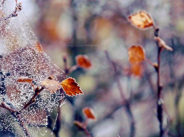 Frosty Morning IV by FreyaPhotos