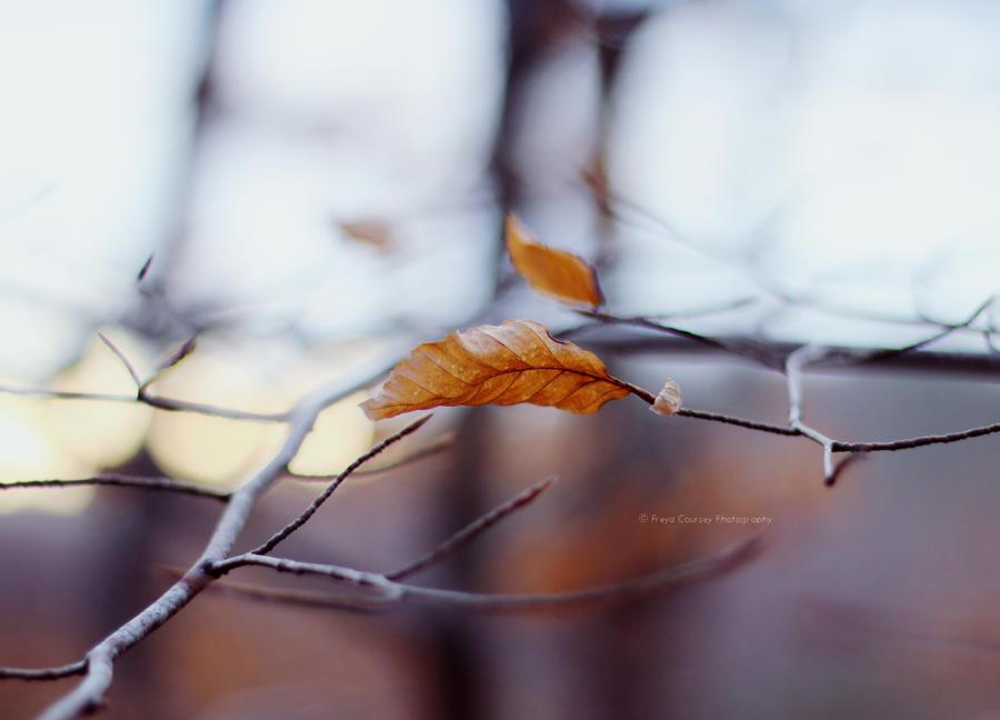 Winter Sun by FreyaPhotos