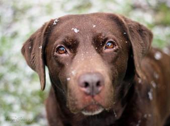 Snow Dog by FreyaPhotos