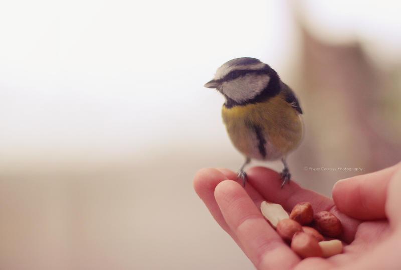 Bird in my hand by FreyaPhotos