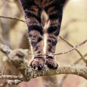 Paws by FreyaPhotos
