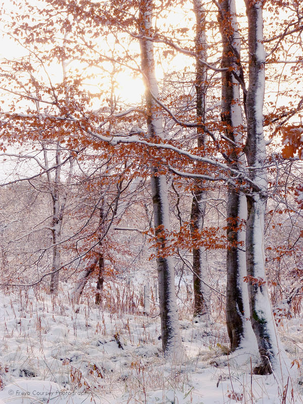 December by FreyaPhotos