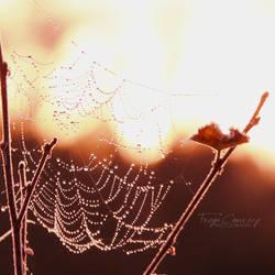 Cobwebb Sunrise by FreyaPhotos