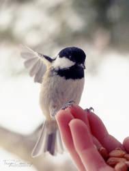A Winters Friend by FreyaPhotos