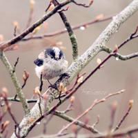 Little Bird by FreyaPhotos