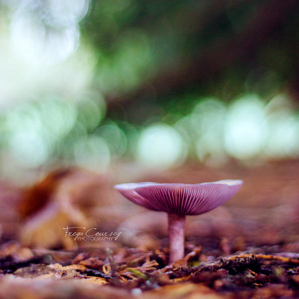 Amethyst deceiver by FreyaPhotos