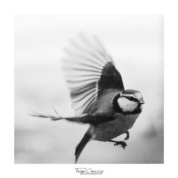 Flight by FreyaPhotos