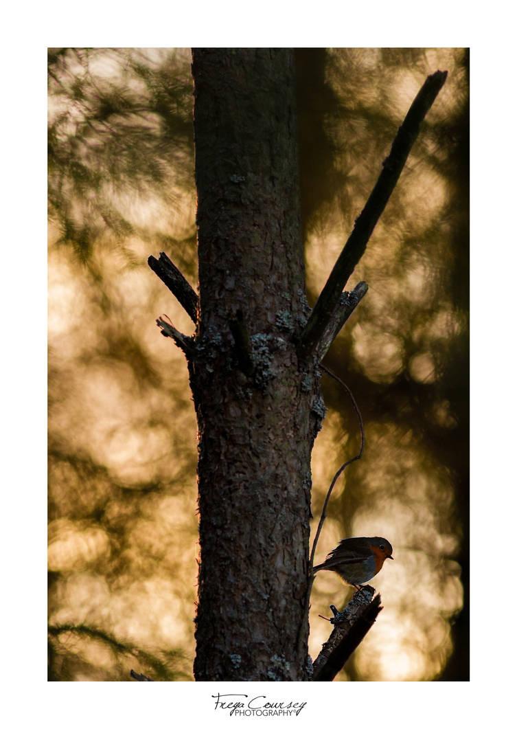 Low sun by FreyaPhotos
